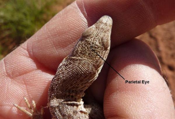 Image courtesy of wazoologist.blogspot.com